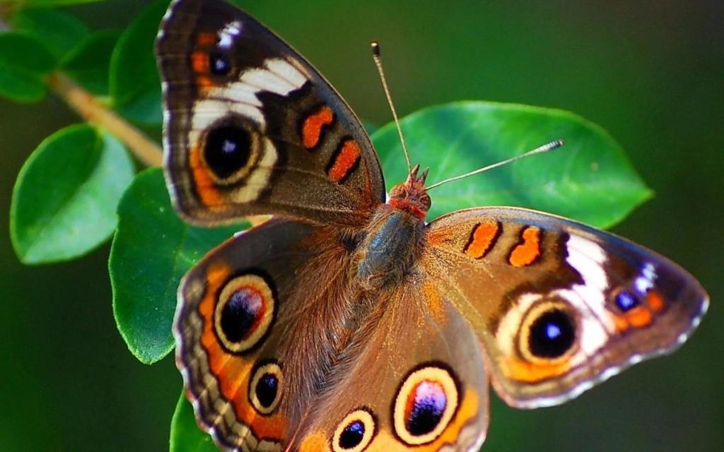 Картинки красивые животные и насекомые